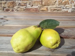 Beautiful Quince