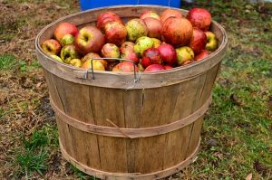 red apples in a wooden barrel