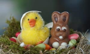Chocolate rabbit and chick coming out of egg shell