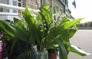 Picture of Muguet or Lily of the Valley