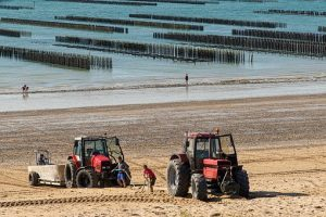 2 oyster farmers' tractors on a beach-oyster park