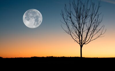 A lunar calendar to improve my gardening skills